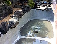 池造園及び池工事