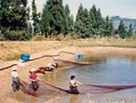 新潟野池預かり
