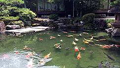 山水園(湯田温泉)池泉回遊庭園