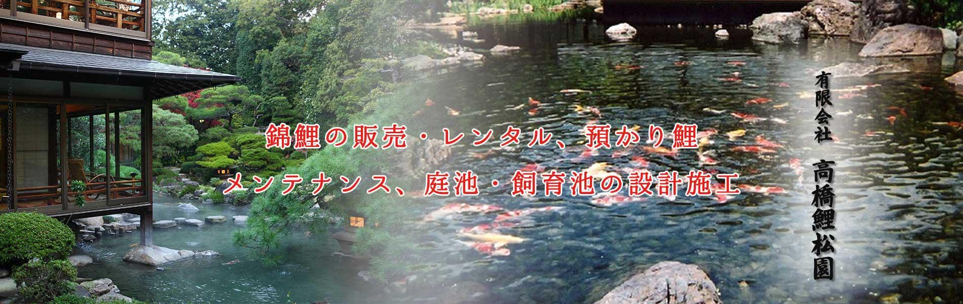 錦鯉の販売・レンタル、預かり鯉、メンテナンス、庭池・飼育池の設計施工
